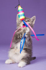 Young kitten playing with rainbow toy mouse