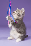Young kitten playing with pink toy mouse