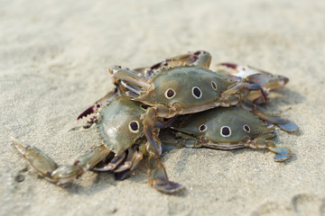 Caught crabs on the sand
