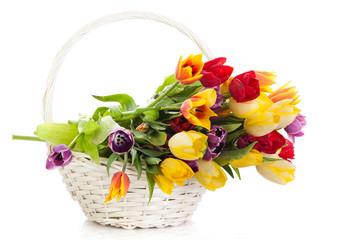 Basket of  Tulips isolated on white background.  Bouquet of tuli