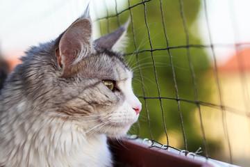 Balkon Katze!!!