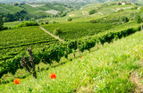 Langhe, hilly wine region in Piedmont, Italy