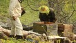 Spring works on an apiary. beekeeping