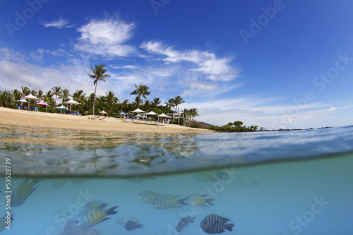 Tropical beach and fish in Whitsundays