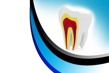 cross section of teeth