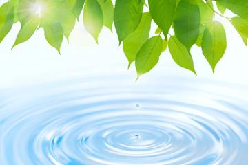 輝く水と新緑