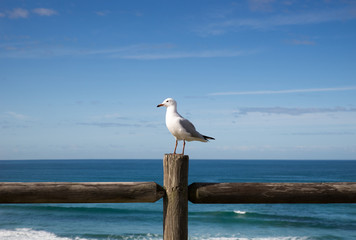 Seagull perched on a wooden fence against an ocean view
