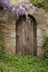 Gartentür mit Glycine