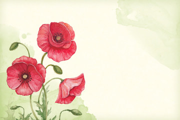 Artistic background with watercolor illustration of poppy flower