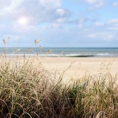 dünengras am strand