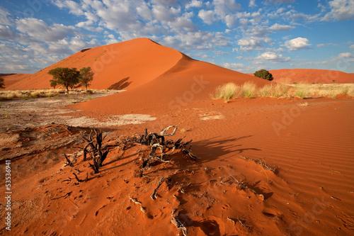 Fototapeten,landschaft,sand,sanddünen,baum