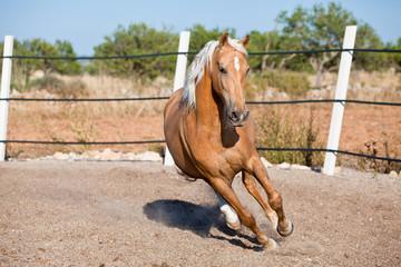 cruzado helles pferd im freien im sommer auf der wiese