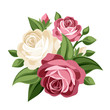 Pink and white vintage roses. Vector illustration.