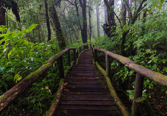 Wood footpath in tropical rain forest in Thailand