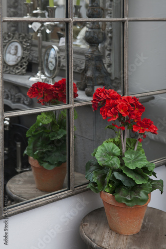 Artificial geraniums standing on  bedside table near mirror