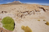 Frozen lava with endemic plant llareta, Altiplano, Bolivia.