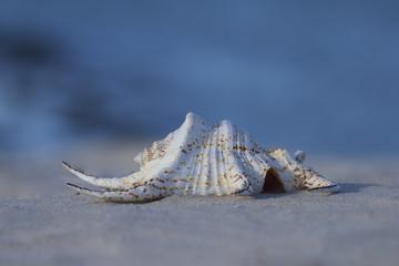 White seashell in sand