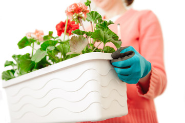 Female hands holding large pot with fresh planted flowers