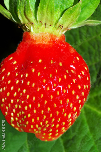 Strawberries berry isolated on green background