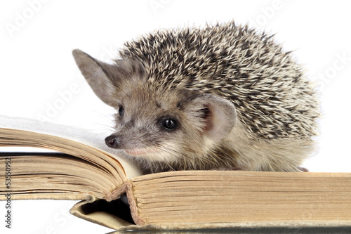 cute hedgehogs read book