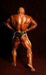 The bodybuilders back