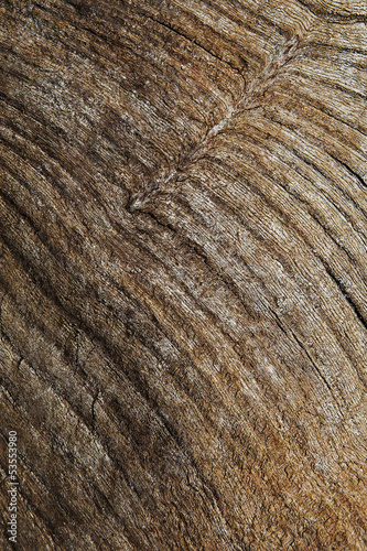 Wood Bark / Grain - Background Texture.