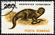 stamp printed in the Romania, shows the Egyptian Mongoose