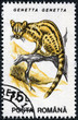 stamp printed in the Romania, shows the Common Genet