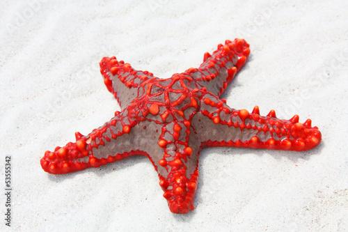 red starfish - 53555342