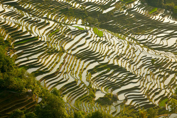 Rice terraces background