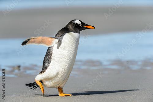 Foto op Canvas Poolcirkel Gentoo penguin poses.