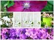 montage floraison 2014