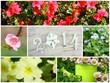 2014, composition fleurs