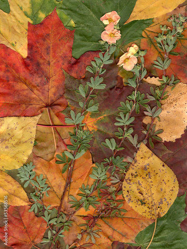 Vintage autumn framed background