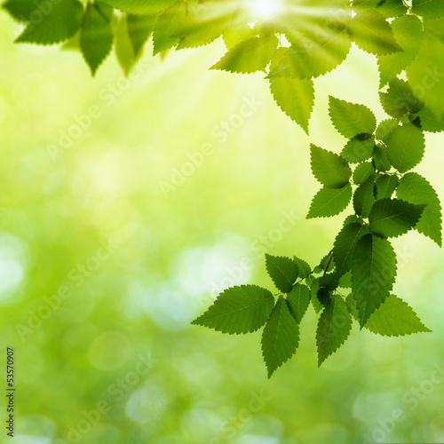 Summer day in the forest, abstract natural backgrounds