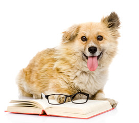 dog with book looking at camera. isolated on white background