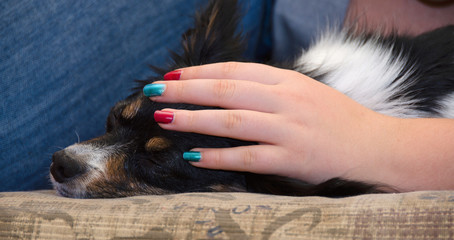 Sleepy Papillon under protection of colorful nails