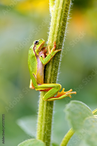 Portrait of a tree frog
