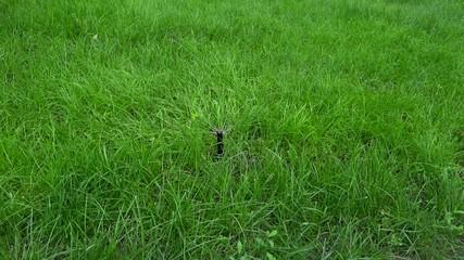 garden irrigation spary
