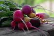 разноцветный редис