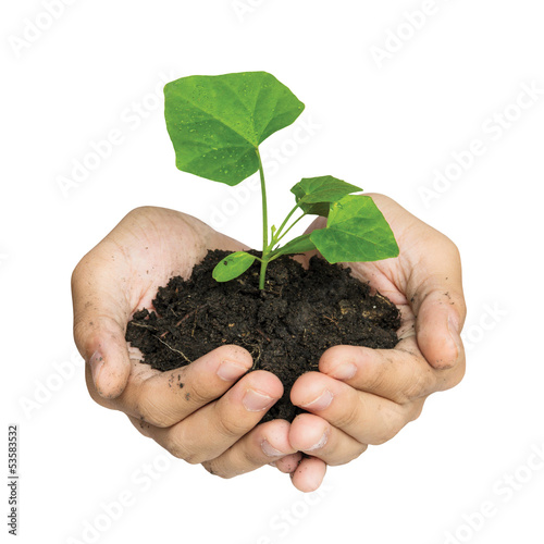 Hand holding a tree for giving life to the Earth isolated over w