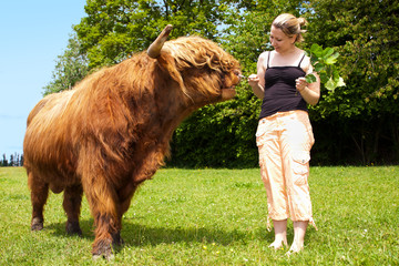 Blonde Frau füttert Highland cattle