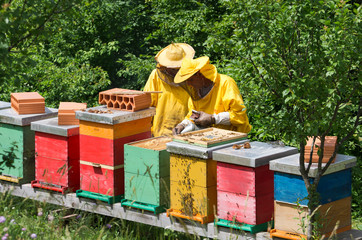 apiarist working in forest