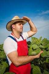 Farmer in field