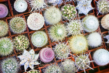 Small decorative different types of cactus plants.