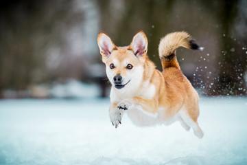 Hund im Flug
