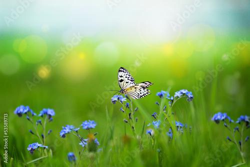 Deurstickers Vlinder Vergißmeinnicht
