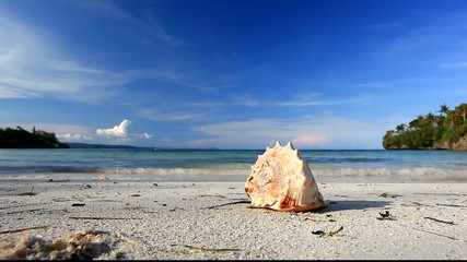 Seashell on beach, Philippines, Boracay