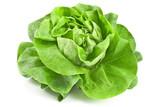 Fototapety Fresh lettuce
