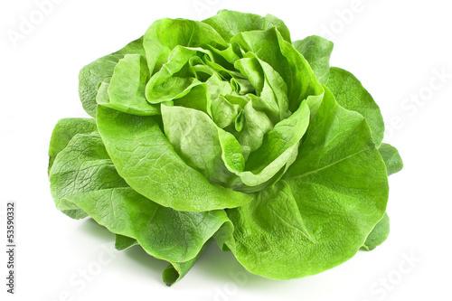 Fresh lettuce - 53590332